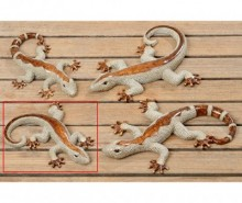 Decoratiune Lizard Bijan Two S