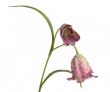 Floare artificiala Fritillaria Burgundy