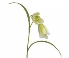 Floare artificiala Fritillaria White